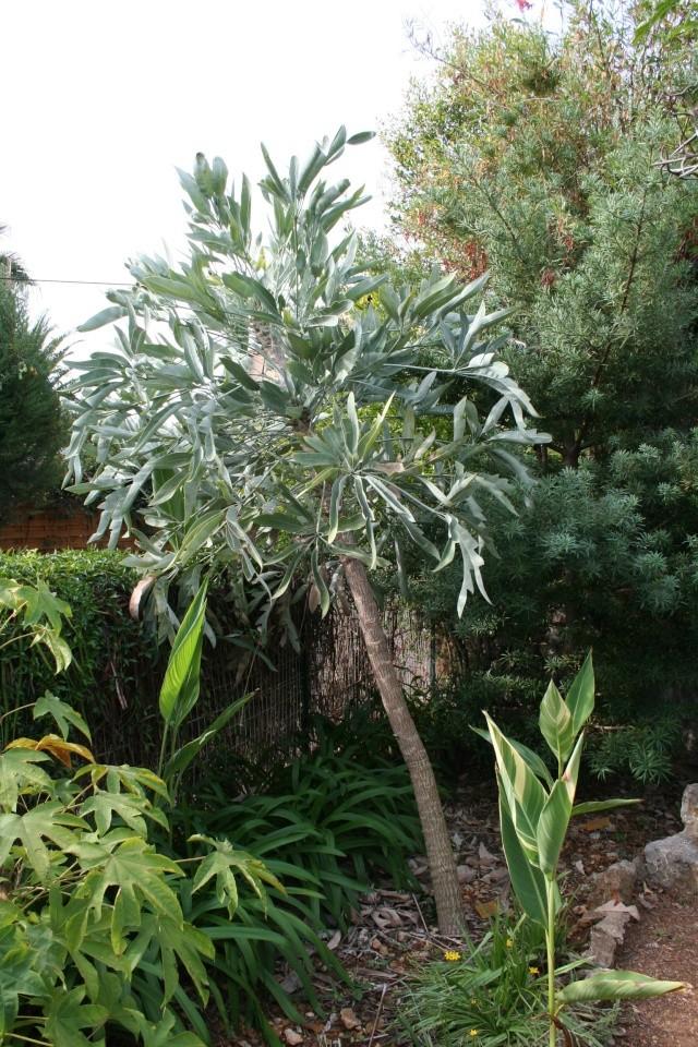 Visite d'un jardin extraordinaire Cusson10