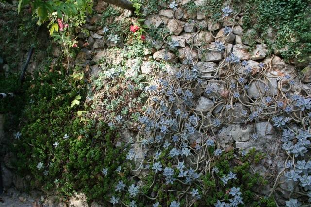 Visite d'un jardin extraordinaire Grapto10
