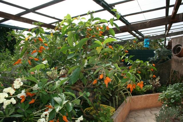 Visite d'un jardin extraordinaire Juanul10