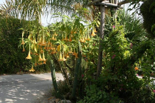 Visite d'un jardin extraordinaire Juste_10