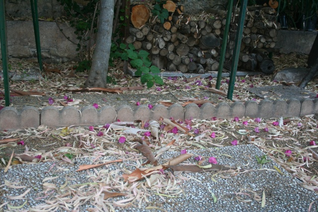 Ce matin , petit tour de jardin L_auto10