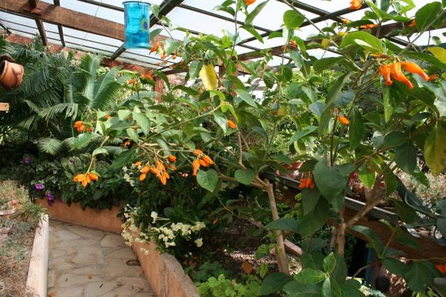 Visite d'un jardin extraordinaire La_ver10