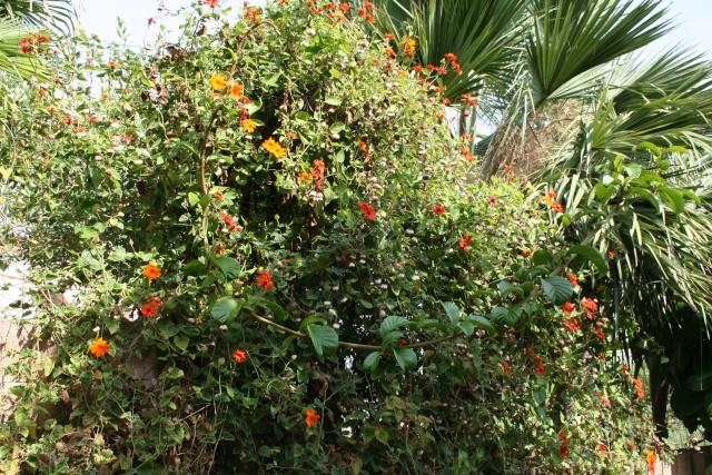 Visite d'un jardin extraordinaire Melang10