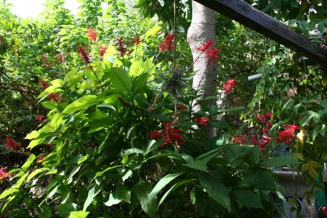 Visite d'un jardin extraordinaire Odonto11