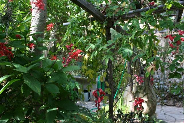 Visite d'un jardin extraordinaire Odonto12