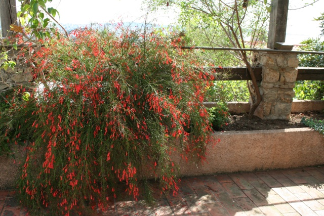 Visite d'un jardin extraordinaire Russel10