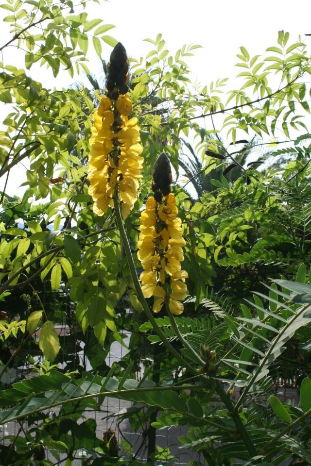 Visite d'un jardin extraordinaire Senna_10
