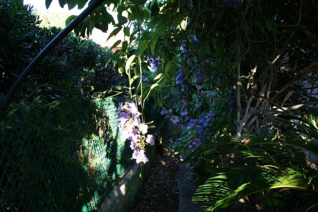 Ce matin , petit tour de jardin Thunbe10