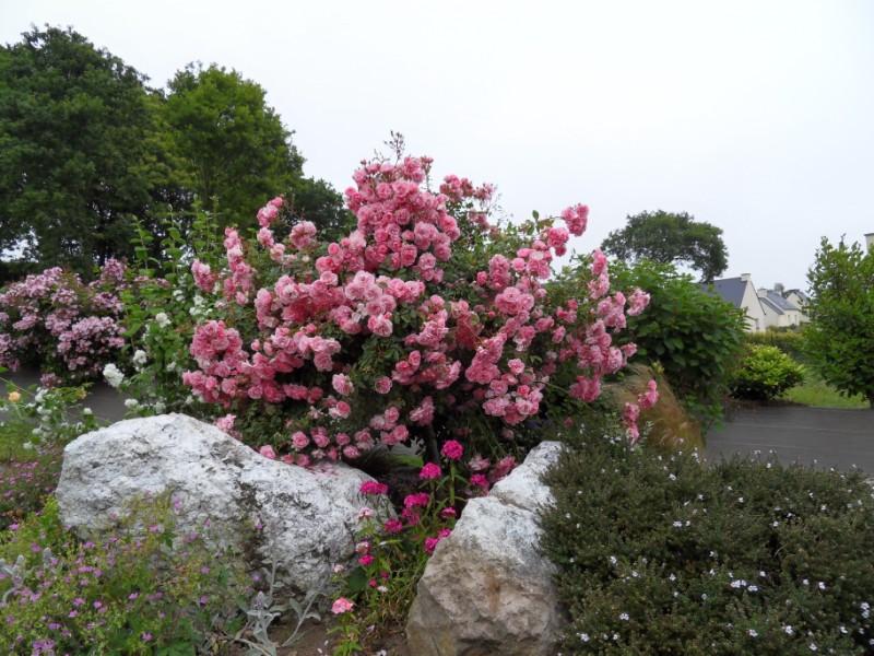 Floraisons du mois de juin Sdc17117