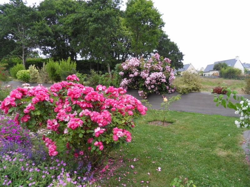 Floraisons du mois de juin Sdc17118