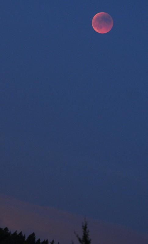 15 juin 2011 , éclipse totale de lune Nik_9911