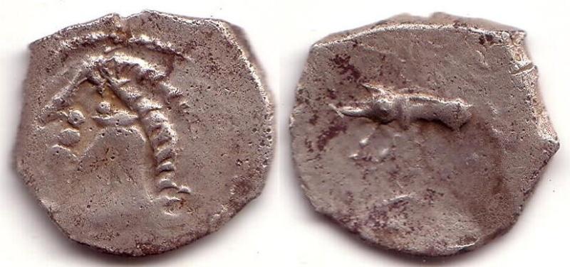 Petites têtes sur drachme au sanglier Sang_110