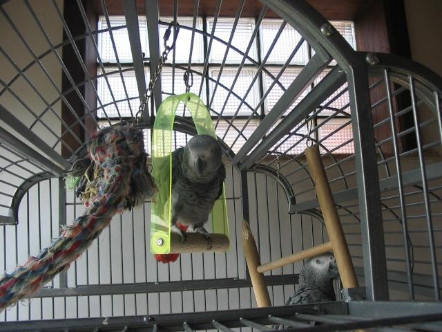 nos perroquets 13-09-10
