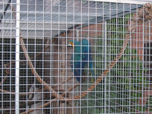 nos perroquets 18070712