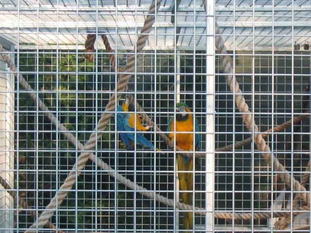 nos perroquets 18070713