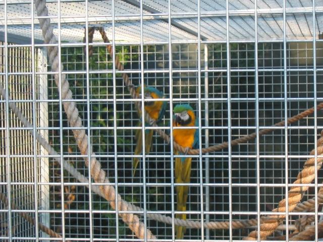 nos perroquets 18070714