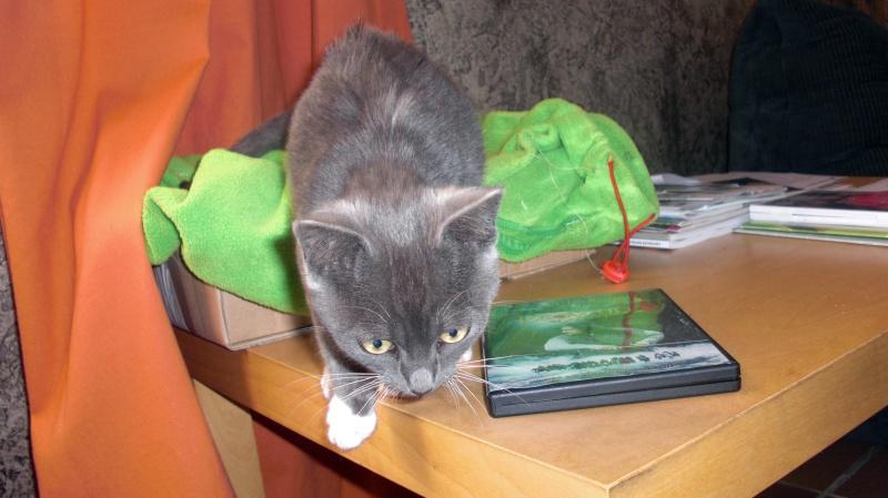 Le chat Grisou... Cimg0311