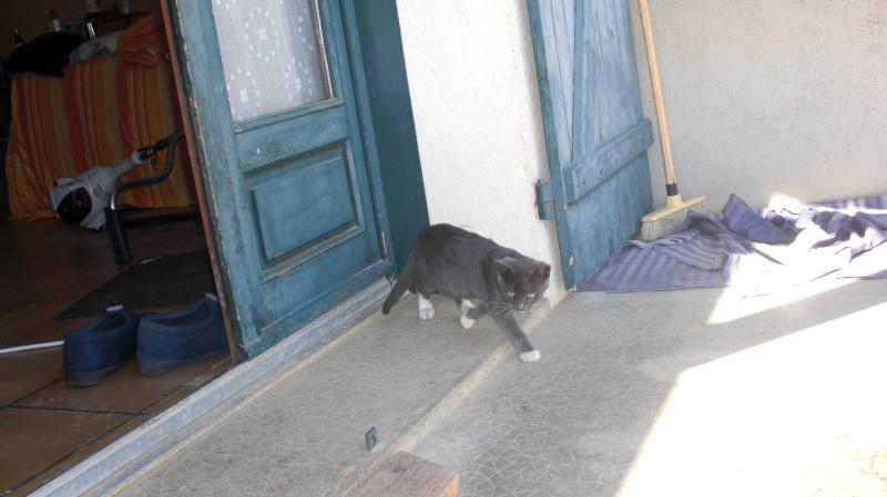 Le chat Grisou... Cimg0418