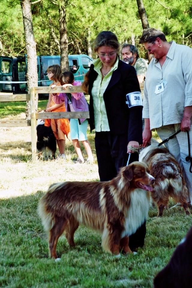Régionale d'élevage Berger Australien à Sendets 16/09/07 - Page 5 Imm00510