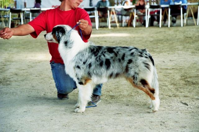 Régionale d'élevage Berger Australien à Sendets 16/09/07 - Page 5 Imm00810