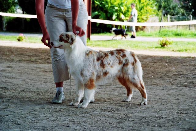 Régionale d'élevage Berger Australien à Sendets 16/09/07 - Page 5 Imm00910