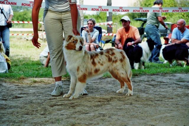 Régionale d'élevage Berger Australien à Sendets 16/09/07 - Page 5 Imm01810