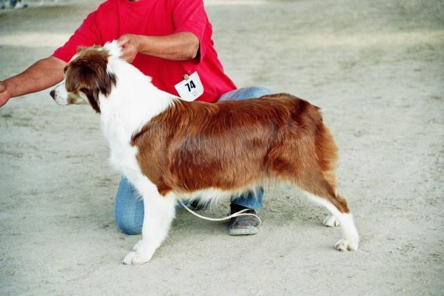 Régionale d'élevage Berger Australien à Sendets 16/09/07 - Page 5 Imm02310