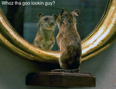 Vous aimez les rats ? Lolz_r11