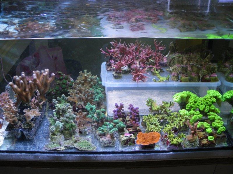 bourse aux boutures de coraux de limoges  - Page 2 Jerome10