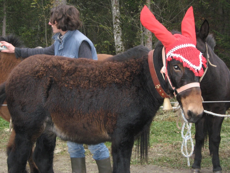 Contamines-Montjoie 2010 - Rencontre des muletiers... et de leurs mules - Page 2 Img_0014