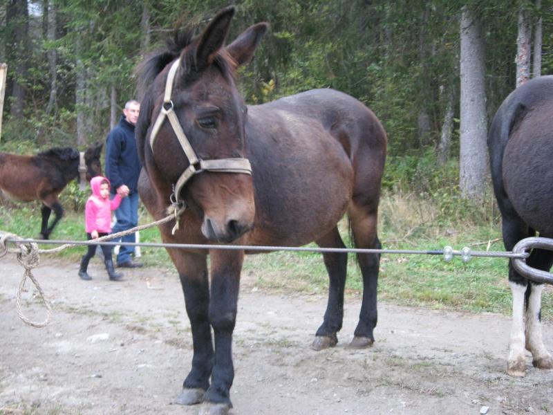 Contamines-Montjoie 2010 - Rencontre des muletiers... et de leurs mules - Page 2 Img_0018