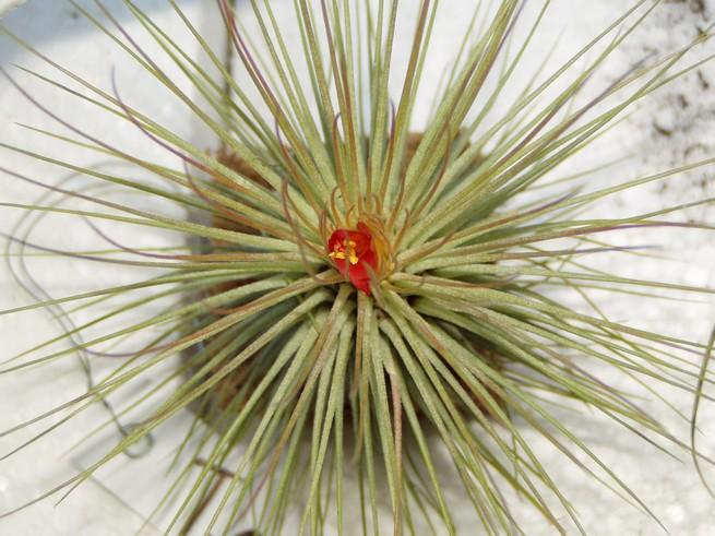 44èmes Journées des Plantes de Beervelde Fleur_16