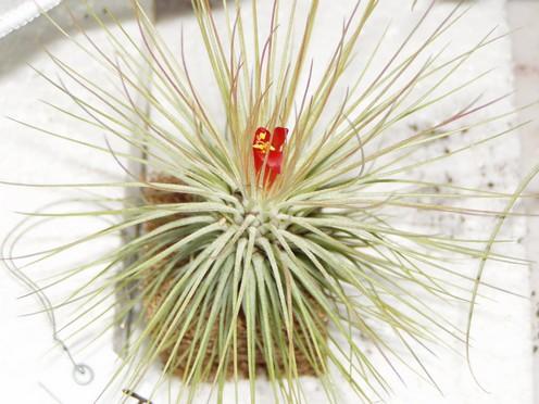 44èmes Journées des Plantes de Beervelde Fleur_17