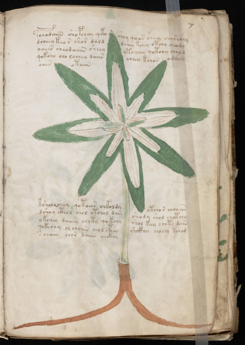 Manuscrit de Voynich 10060810