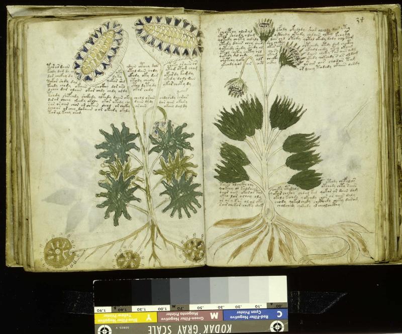Manuscrit de Voynich F33v11