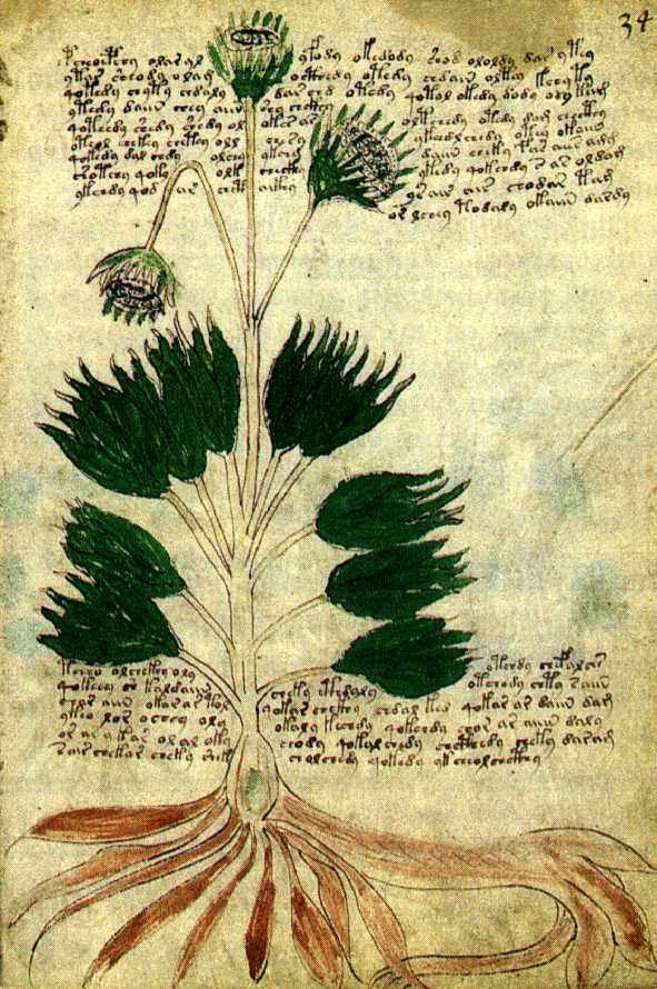 Manuscrit de Voynich F34r11