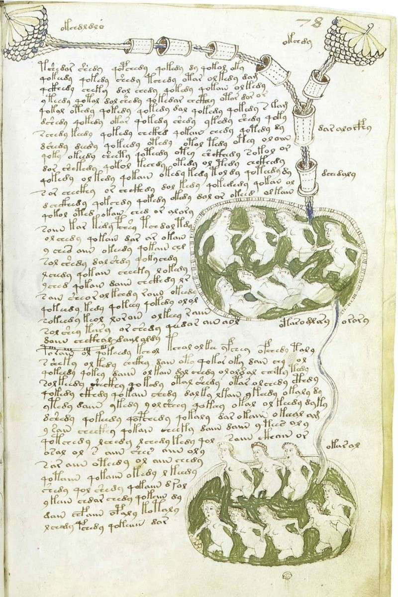 Manuscrit de Voynich F78r11