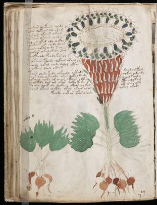 Manuscrit de Voynich Hbuxjj10