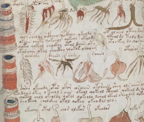 Manuscrit de Voynich Pictur10