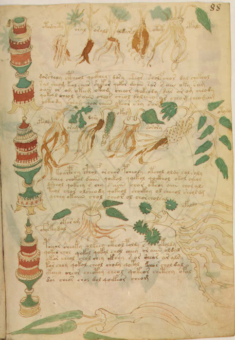 Manuscrit de Voynich V1310