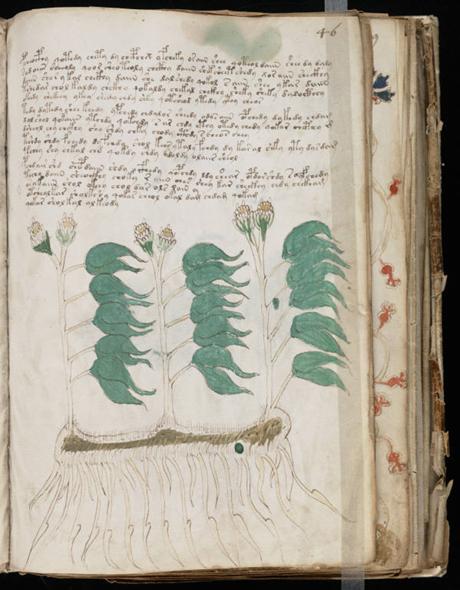Manuscrit de Voynich Voynic12