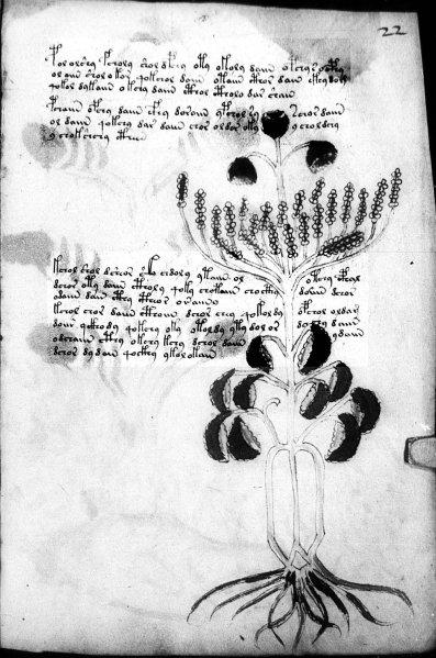 Manuscrit de Voynich Voynic13