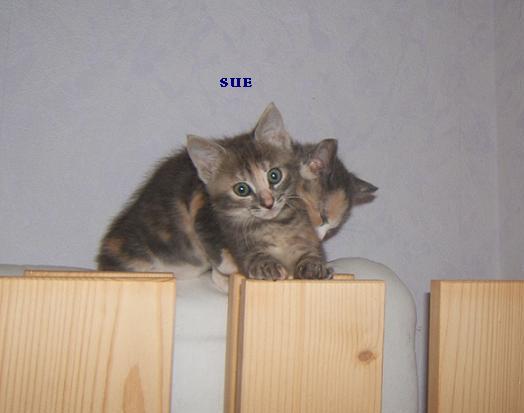 Sue, petite boule de poil Sue_et10