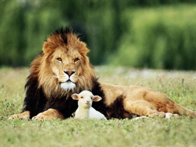 Les animaux et autres bestioles - Page 2 Lion-a10