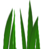 Brush Herbet10