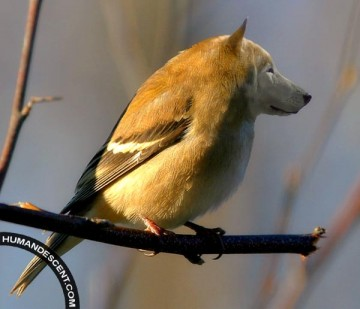 Portrait chinois Oiseau10