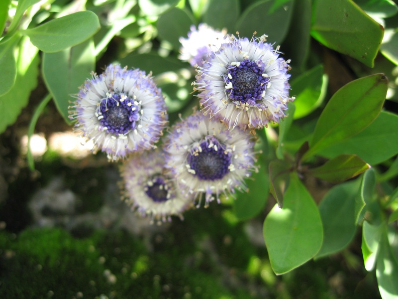 Fleurs du jardin Img_0012
