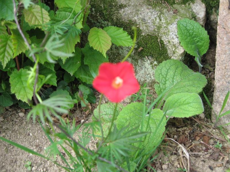 Fleurs du jardin Img_0013