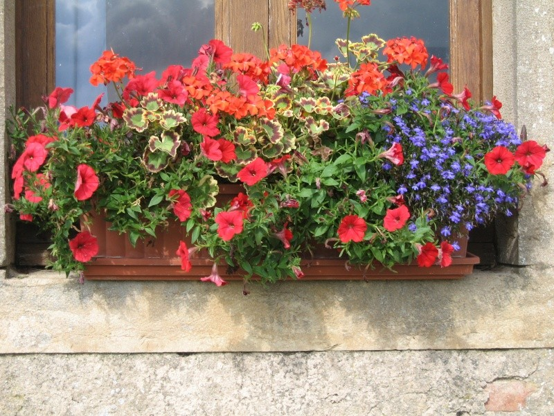 Fleurs du jardin Img_0014