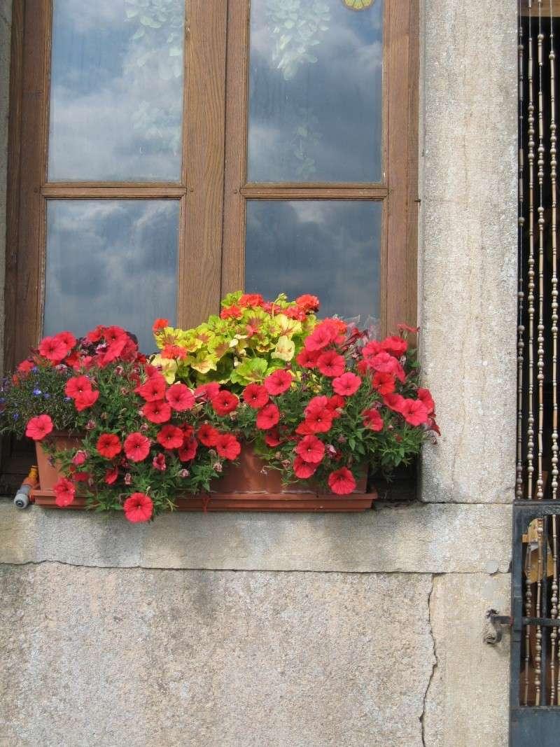 Fleurs du jardin Img_0015